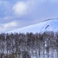 Photos: White trees