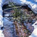 Photos: 森の遅い春