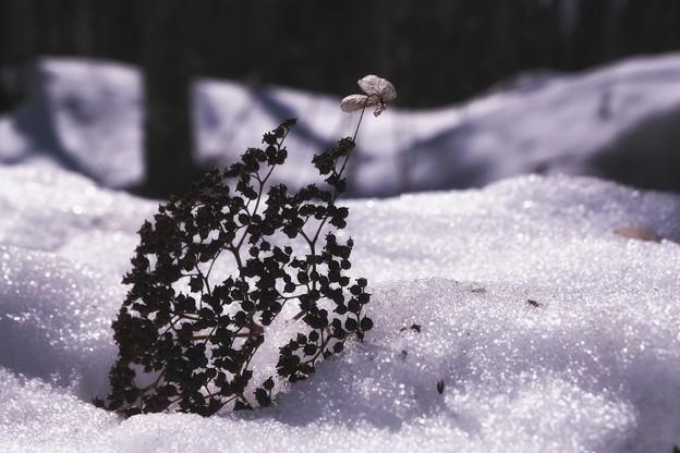 「冬の忘れ物」