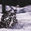 Photos: 「冬の忘れ物」