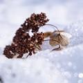 Photos: 「小鳥の落とし物」
