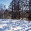 Photos: 冬尽き...風光る