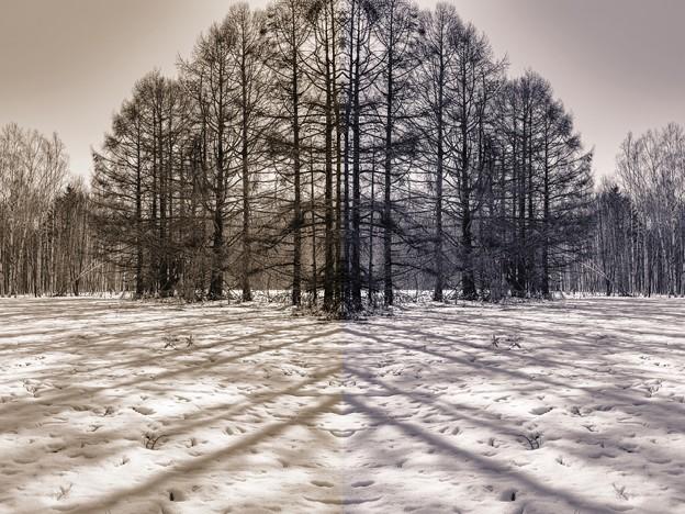 「人工林」