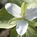 春の白を求めて......