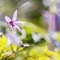 Photos: Vivid spring