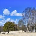 青空と白樺と南風~