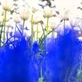 「ハニームーンの夢の夢」