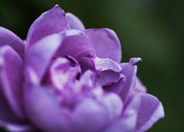 青い二番花
