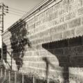 Photos: warm wall /本日の3枚