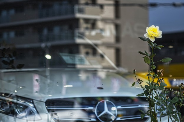 Photos: 「高嶺の花」