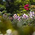 9月の庭/もうすぐ冬支度