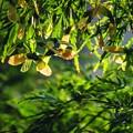Photos: yellow diagonal sunshine