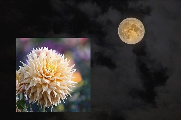 「満月と満月」