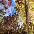 秋空を映す