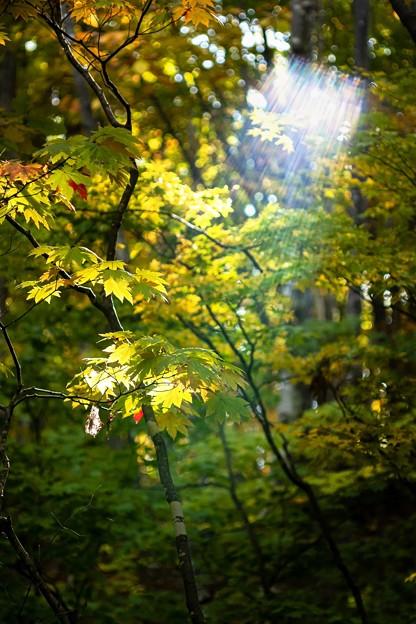 ● shower of autumn light