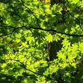 ● green to shine