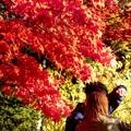 紅葉を撮る