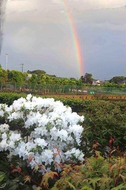 サツキと虹