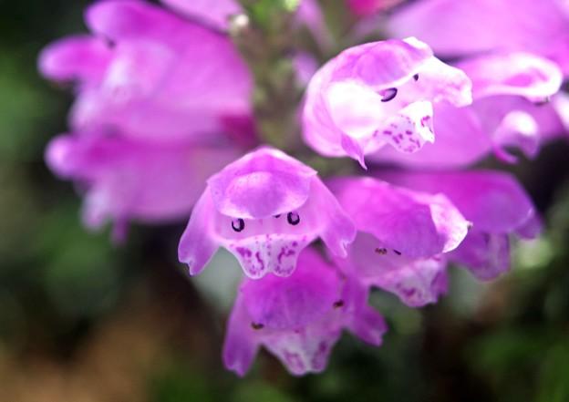 Photos: 何の花