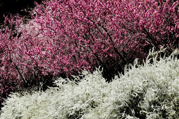 里山の春2