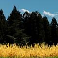 里山の春3