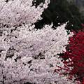 里山の春4