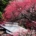 Photos: 春の里