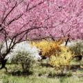 Photos: 春の園