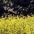 Photos: 春景