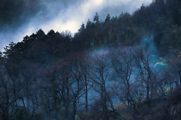 Photos: 雨後の霧