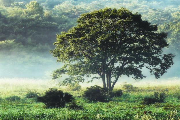 Photos: 朝の樹木