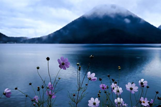 湖畔に咲く