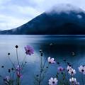 Photos: 湖畔に咲く