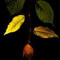 Photos: 光る葉