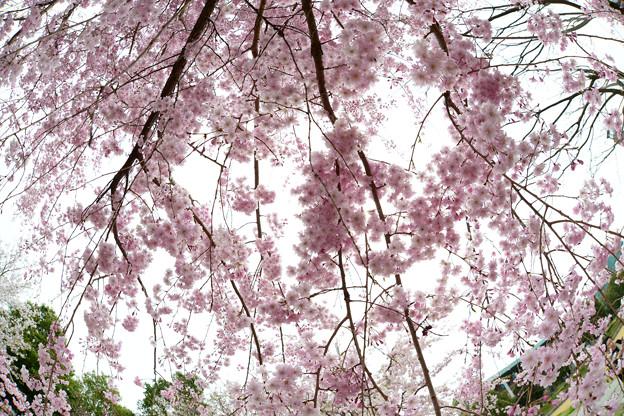 Photos: 「さくら」森山直太朗 テナーサックスで 高知工科大学 絵夢島/PIXTA