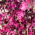 名前が分かりません、近所でよく見かける花