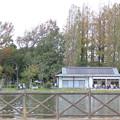 「アルフィー 」バート・バカラック テナーサックスで 三郷公園 絵夢島/PIXTA