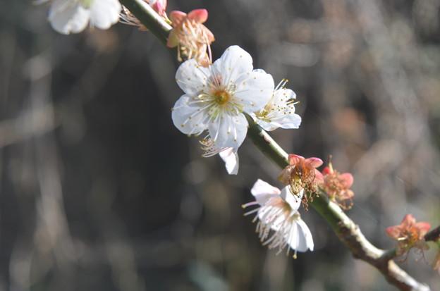 春のかおり。