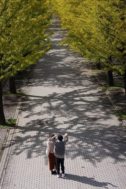 あづま総合運動公園イチョウ並木