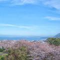 Photos: 2021年桜