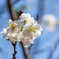 ちょっと早めの春