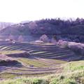 Photos: 春の棚田