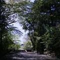 Photos: 新緑の参道