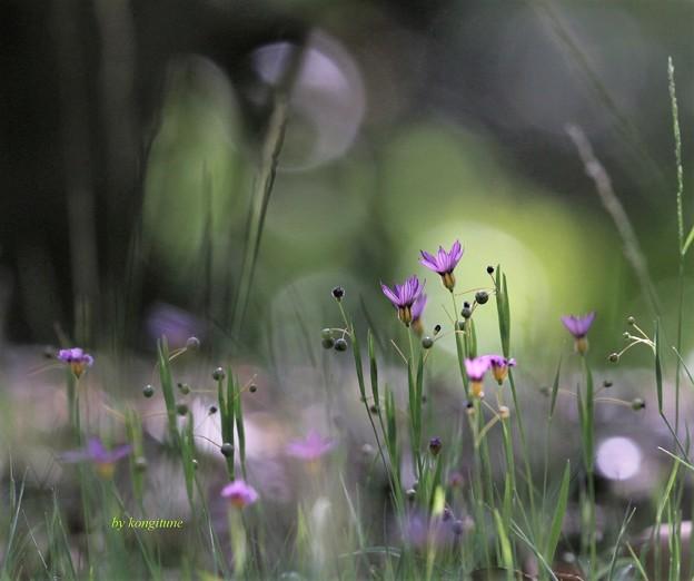 夏草のささやき