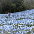 Photos: ネモフィラ畑で掴まえて