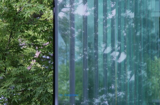 新緑のカーテン