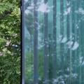 Photos: 新緑のカーテン