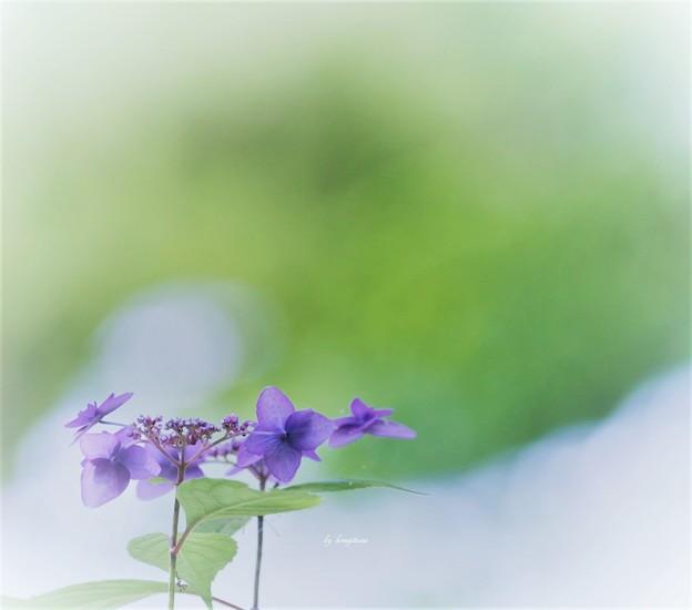 Photos: 慎ましく・・・