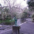 Photos: 源兵衛川に来ました2021_03_08__9999_68 (2)