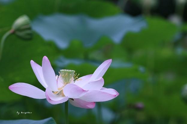 Photos: 天上の花